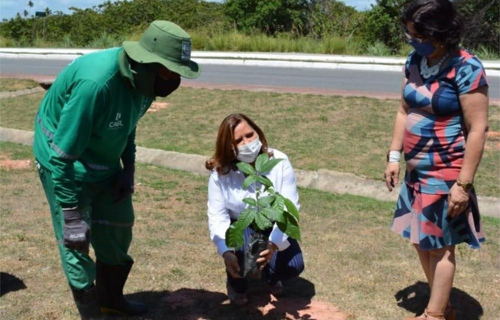 Prefeitura do Ipojuca lança projeto de plantio no balneário de Porto de Galinhas