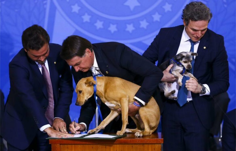 PL que proíbe abate de cães e gatos pelo poder público vai à sanção presidencial